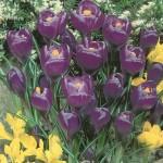 Flower Record 001