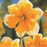 Orangery 055
