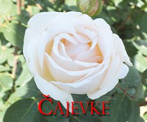 cajevke