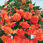 Orange 028