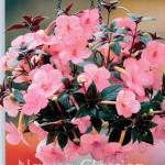 Fairy Pink 733