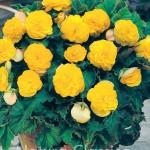 Yellow 023