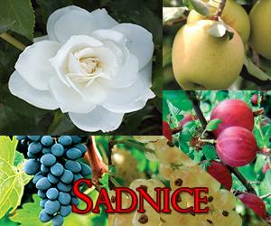 sadnic4
