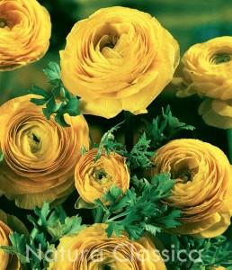Yellow 160